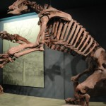Megatherium (giant ground sloth)