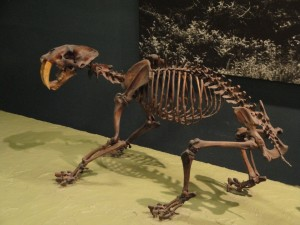 Smilodon (saber-toothed tiger)