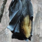 fruit bat hanging from a branch