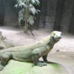 Komodo dragon posing