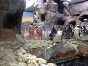Popping up into the penguin exhibit